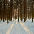 Sunlight rays in winter forest — Stock Photo #68628187