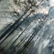 Fire in the forest — Stock Photo #71934153