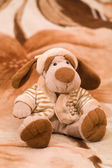 Dog on carpet — Stock Photo