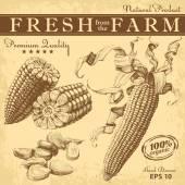 Hand drawn corn set — Stock Vector