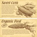 Hand drawn corn — Stock Vector #66236063