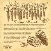 Hand drawn corn — Stock Vector
