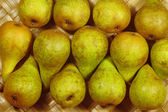 Robust, ripe pears — Stock Photo