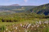 Flowers on medow in mountains — Stock Photo