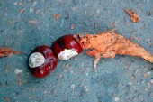 Chestnuts on the autumn street — Foto Stock