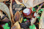 Chestnuts on the autumn street — Stock Photo