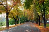 Colorful foliage in the autumn park — Стоковое фото
