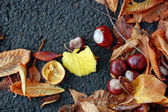 Chestnuts on the autumn street — Stock Photo