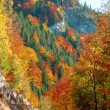 Autumn colors in the mountains — Stock Photo #55391601