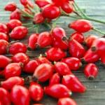 Ripe rose hip berries — Stok fotoğraf