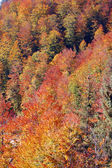 Autumn colors in the mountains — Stock Photo