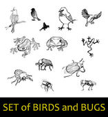 Set of birds and bugs — Stock Vector