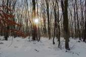 Cold winter in the woods — Stock Photo