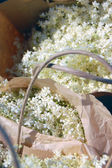 Elderflowers in paper bags — Stock Photo