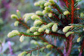 Green prickly branches — Stock Photo