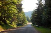 Summer road between pine trees — Stock Photo