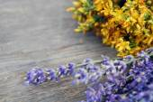 Background of lavender and St John's wort — Стоковое фото
