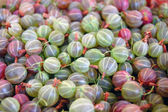 Heap of ripe Gooseberries — Stock Photo