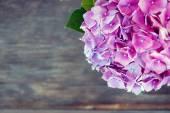 Beautiful Hortensia flowers — Stock Photo