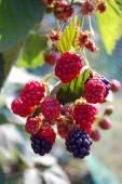 Fresh summer fruit background — Stock Photo