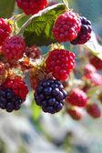 Fondo de fruta de verano fresco — Foto de Stock