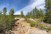 Reforestation of abandoned copper mine, Norway — Stock Photo