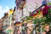 通りの花 — ストック写真