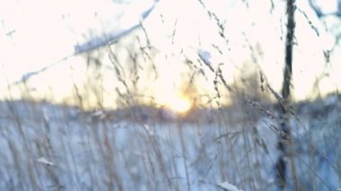 Dried grass on winter field at sunset — Vidéo