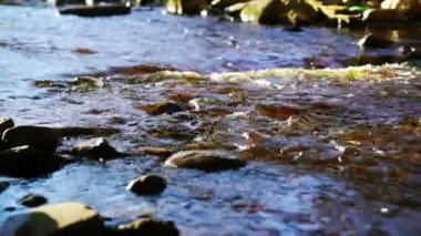 Wild river stream with splashes — Stock Video