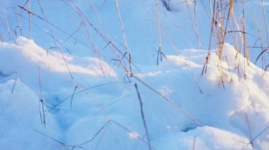 Dried grass on snowy field — Stock Video