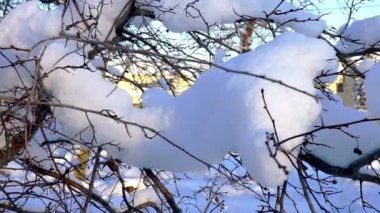 Snowdrifts on tree branch in winter park — Stock Video