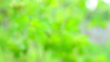 Green bush branch — Stock Video