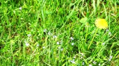 Colorful Wildflowers On A Meadow — Stock Video