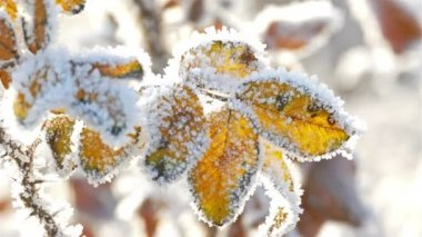 Dry Yellow Leaves With Hoarfrost — Vídeo de Stock