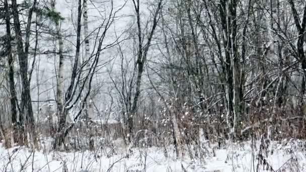 Fuertes nevadas en invierno bosque — Vídeo de stock
