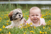 Baby and puppy in the field with buttercups — Stock Photo