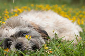 Puppy is playing with the flowers — Stock Photo