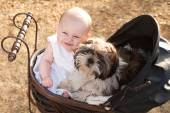 Baby and puppy in vintage pram — Stock Photo