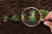 Inspecting sapling with magnifying glass — Stock Photo