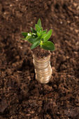 Stack of coins and sapling — Stock Photo