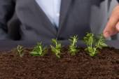 Businessman growing green saplings — Stock Photo