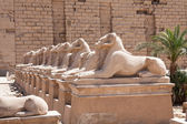 Sphinxes Statue In Karnak Temple — Stock Photo