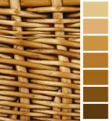 Complimentary color palette chart — Stock Photo