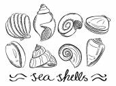 Set of various sea shells — Stock Vector