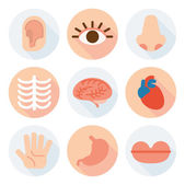 External and internal organs  flat icons — Stock Vector
