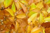 Fundo de folhas de outono — Fotografia Stock