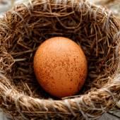 Egg in nest — Stock Photo