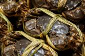 Freshwater hairy crabs — Photo