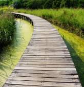 Bridge over a pond — Stock Photo