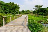 Footbridge in forest — Stock Photo